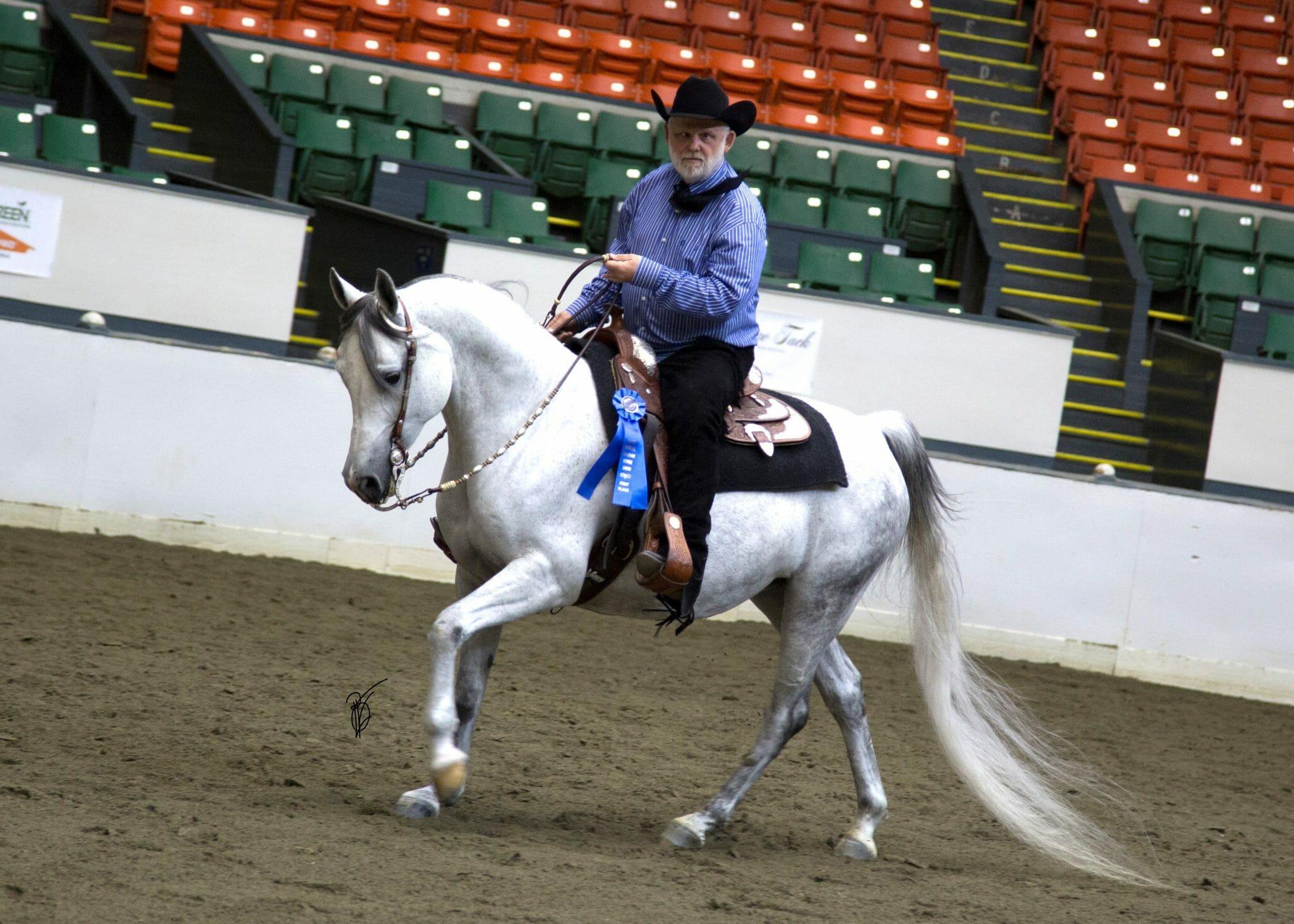Arabians And Half Arabians For Sale Crossen Arabians Warmbloods